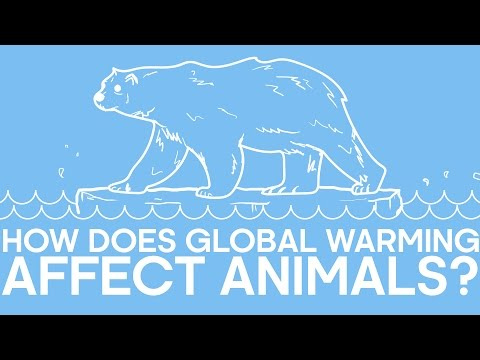 How does global warming affect animals?   earth unplugged