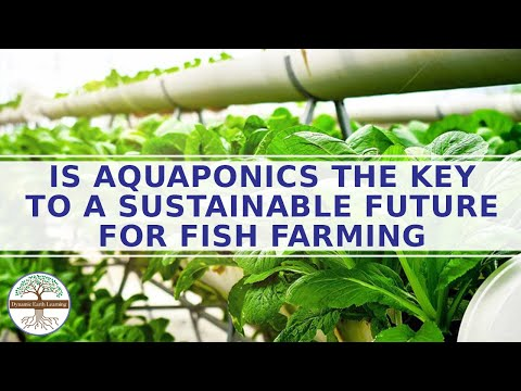 Aquaponics the key to a sustainable future for fish farming - global food shortage