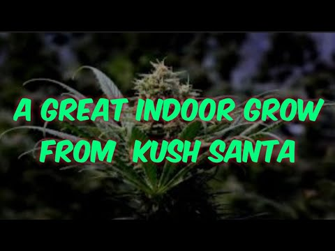 A great indoor grow. it's a perpetual rdwc hydroponics.with great marijuana plant's #fc6500 #sp6500