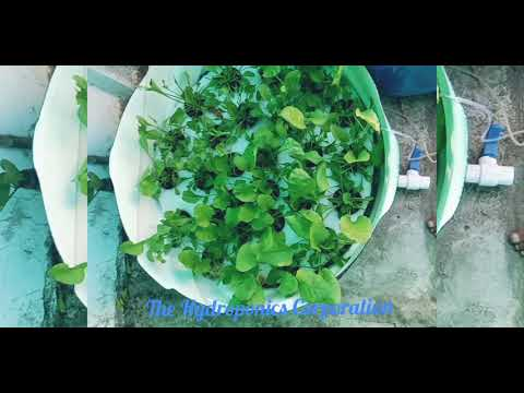 Home hydroponics setup for sustainable and healthy living.
