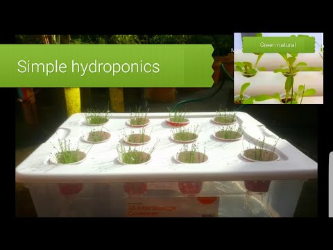 Simple hydroponics for beginners