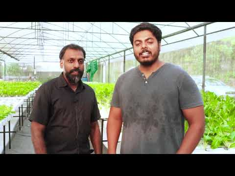 Hydroponics: a journey towards sustainable farming