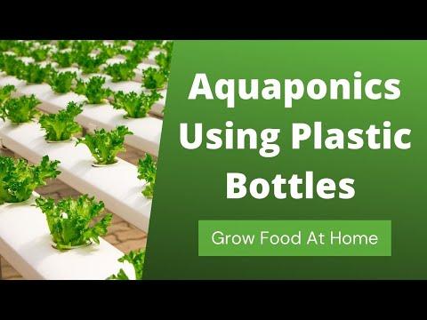 Aquaponics using plastic bottles grow food at home