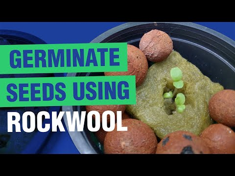 How to germinate seeds using rockwool | hydroponics