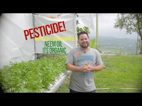 Organic pesticide for hydroponics
