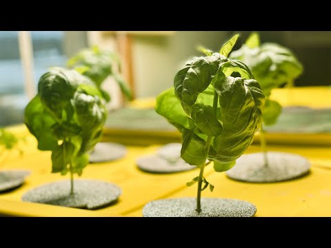 How to set up a deep water culture (dwc) hydroponics system