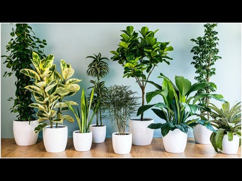 8 indoor plants with air purifying properties