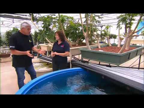 Greenfingers growing in hydroponics and aquaponics