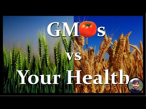 Are gmos bad for your health?