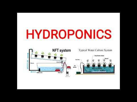 Hydroponics: definition, history, advantages and disadvantages
