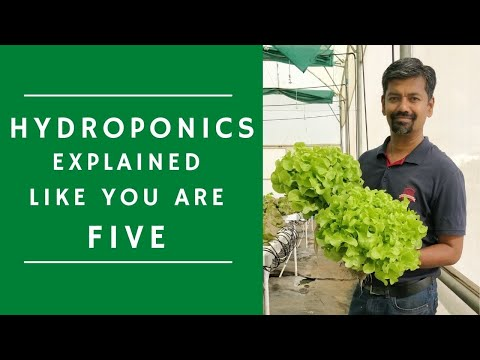 Basic hydroponics explained for beginners