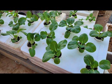How to make a kratky hydroponics for beginners/ kratky method hydroponics