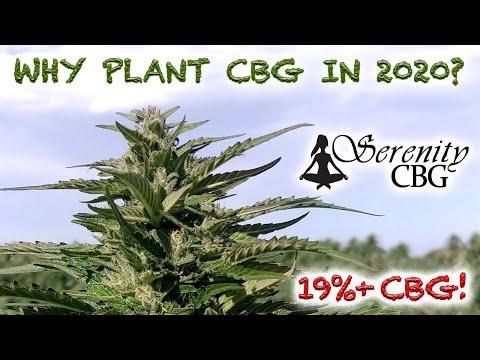 Why grow cbg in 2020