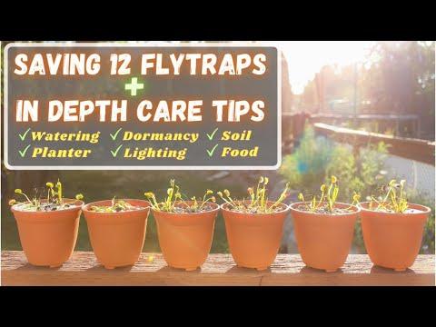 Stop killing your venus flytrap! repotting -new method & beginner care tips walmart & lowes flytraps