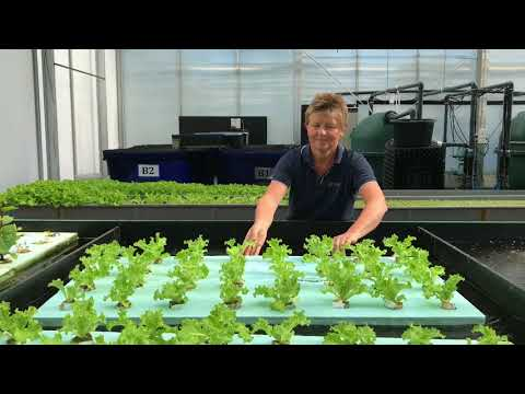 Aquaponics - fish and plants in the same system