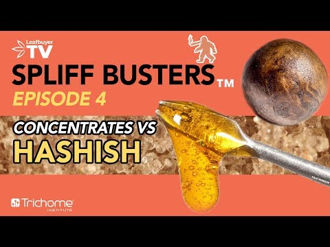 Is hashish better than concentrates?   spliff busters ep 4