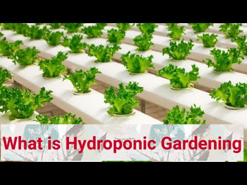 What is hydroponic gardening i advantages and disadvantages of hydroponic farming