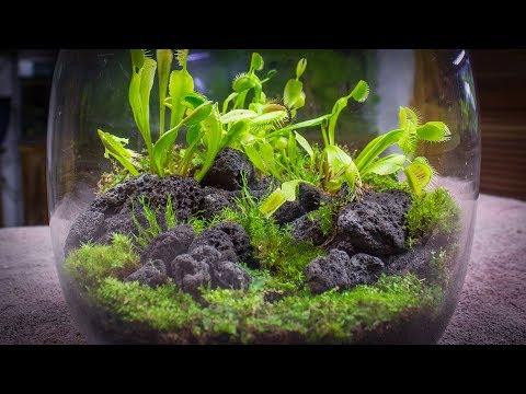 The venus fly trap terrarium