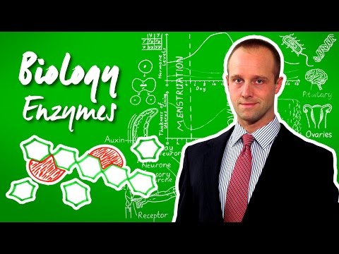 Enzymes - biology - science - get that c in your gcse and igcse