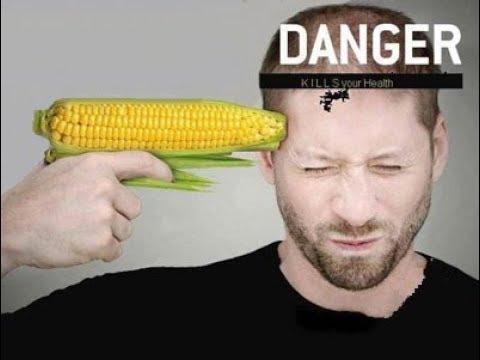 Gmo foods   gmo kills immunity   gmo makes good the bad