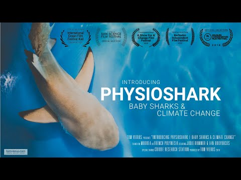 Introducing physioshark | baby sharks & climate change