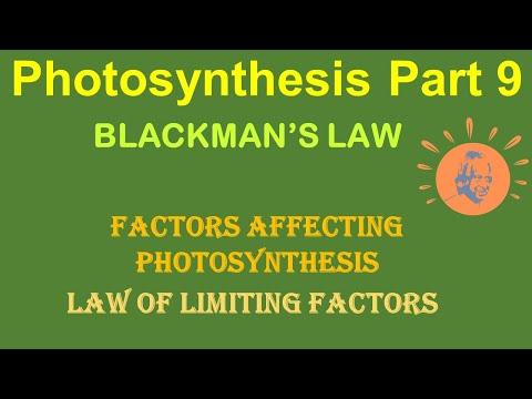 Blackman's law of limiting factors | factors affecting photosynthesis | dr ghanshyam jangid