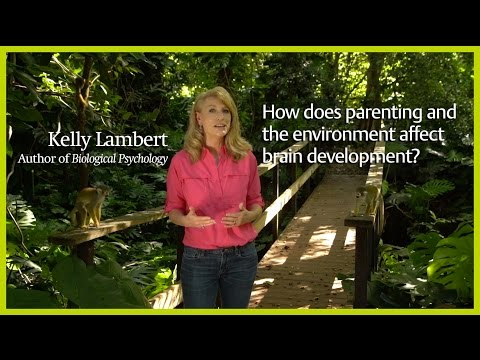 How do parenting and the environment affect brain development?