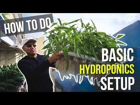 Hydroponics tutorial for beginners - paano magtanim   how to do basic hydroponics