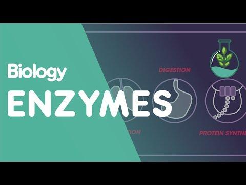 Enzymes   cells   biology   fuseschool
