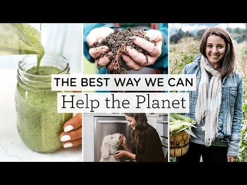 Benefits of a plant-based diet ‣‣ & how you can help the planet