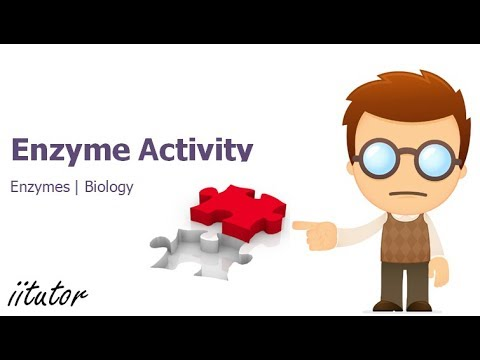 √ factors that influence enzyme activity including temperature   biology