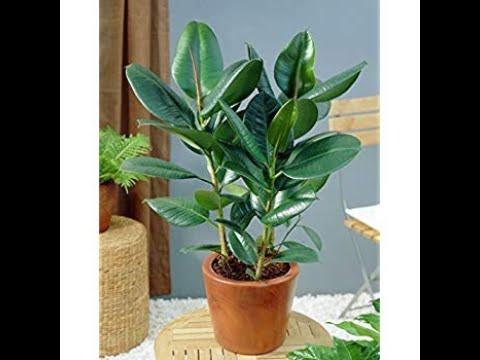 Best bedroom plants for better sleep    induce sleep    air purifier   gardening tips