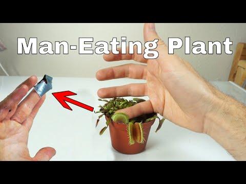 I let a venus flytrap digest my finger for a day–little shop of horrors challenge!