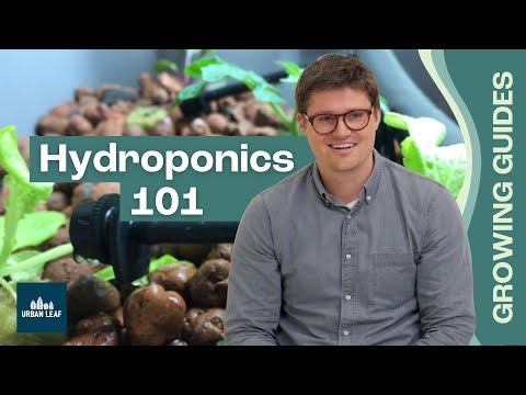 Hydroponics definition & how it works - kratky, nft and others explained