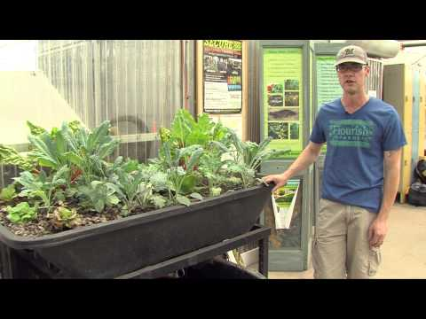 Garden tech: aquaponics