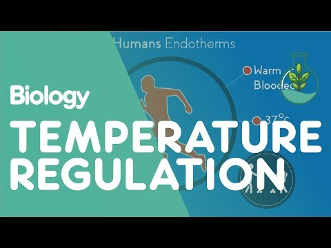 Temperature regulation of the human body | physiology | biology | fuseschool