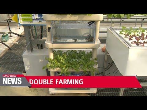Korean researchers develop cost-effective hydroponics technology