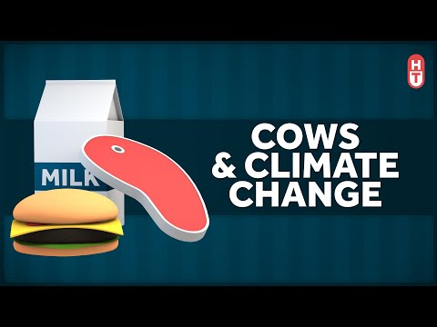Beef isn't great for the environment