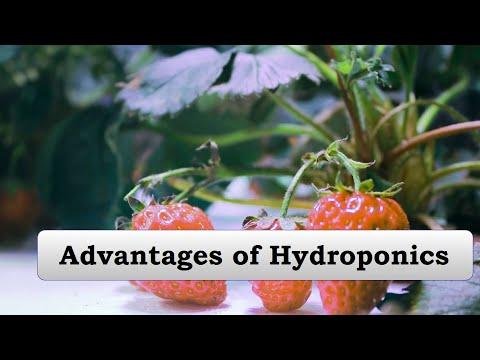 8.advantages of hydroponic(jyoti hydroponics farm)