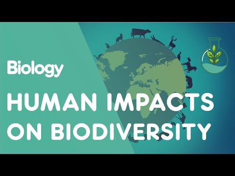 Human impacts on biodiversity   ecology and environment   biology   fuseschool