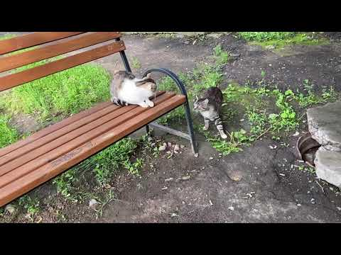 Two funny cats do not want to communicate with me