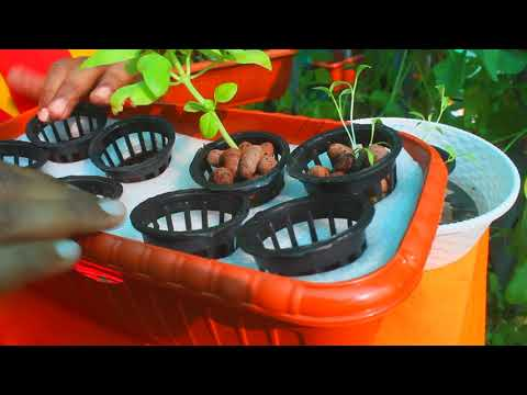 Hydroponics magic pot just rs.400   learn hydroponics at home with this hydroponics kit