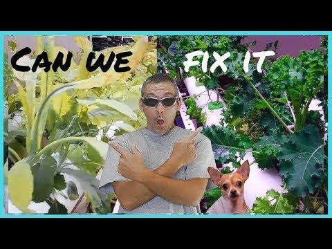 How to fix yellow leaves / easy diy hydroponics / urban gardening / no fuss 😀🌱🌿☘🍃💚