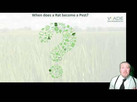 Pestextra: diseases transmitted by rodents and their parasites